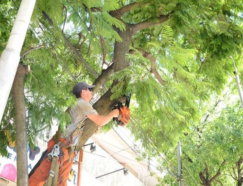 Realizan tareas de despeje de ramas en Monte Grande
