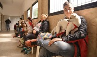 El Municipio de Esteban Echeverría, a través del Centro Municipal de Zoonosis, comenzó con los operativos de vacunación y castración animal, en continuidad con las campañas en beneficio de la salud de caninos y felinos del distrito.