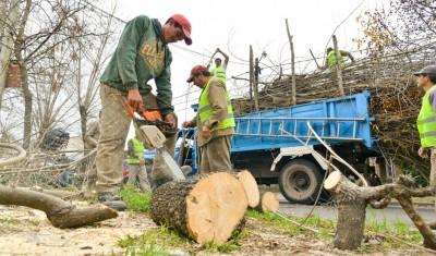 El Municipio de Esteban Echeverría realizó la poda correctiva de 1500 árboles, y extrajo más de 200 ejemplares en riesgo, a través de un plan previamente diagramado, que se inició en mayo, y se extiende hasta el 31 de agosto.