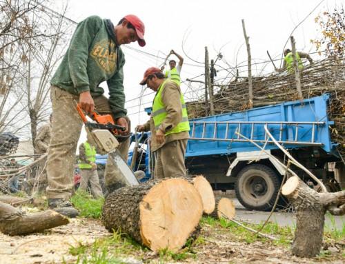 El municipio podó 1500 árboles y extrajo más de 200 especies en riesgo