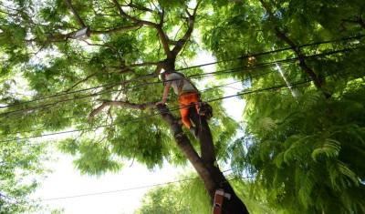 Con el objetivo de resguardar el espacio público, el Municipio de Esteban Echeverría extenderá, en todo el distrito, las tareas de poda destinadas al despeje de luminarias e infraestructura urbana.