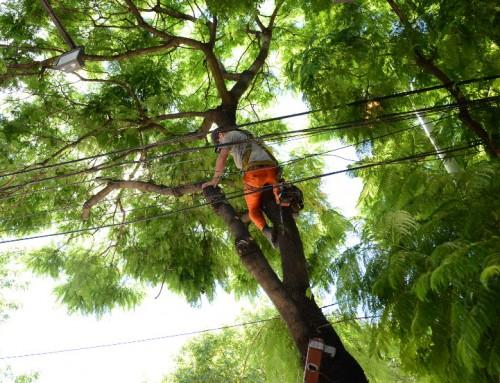 El municipio extiende el período de poda para despeje de luminarias