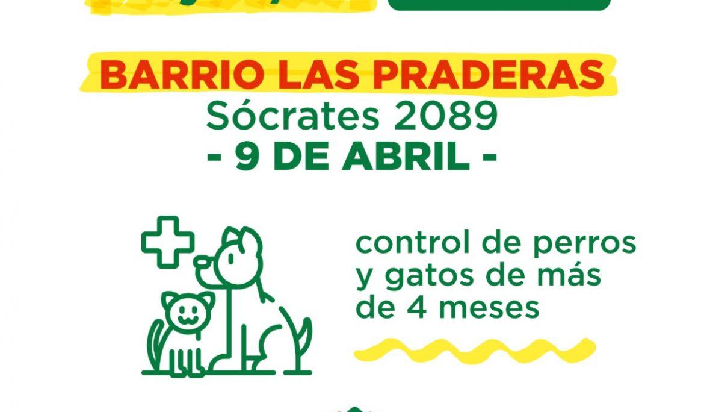 NUEVO OPERATIVO DE CONTROL Y VACUNACIÓN PARA MASCOTAS